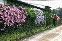 Greenwall planting