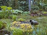 pot out of pond
